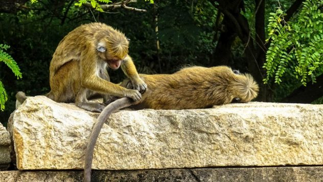 Prorider Trip Sri Lanka Beauty (anuradhapura) Life Monkeys Habits