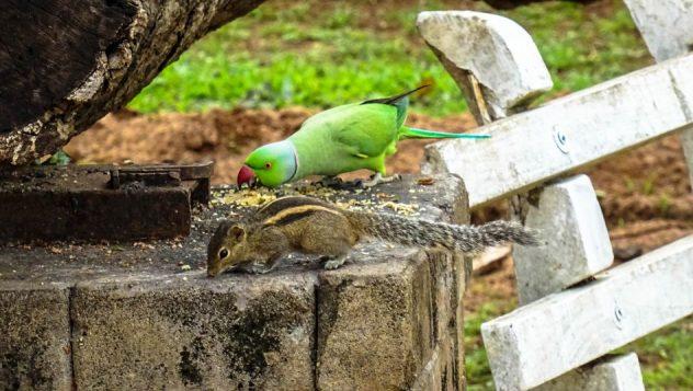 Prorider Trip Sri Lanka Beauty (anuradhapura) Life Perrot Squirrel