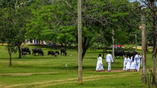 Prorider Trip Sri Lanka Beauty (anuradhapura) Animal Sacred Life