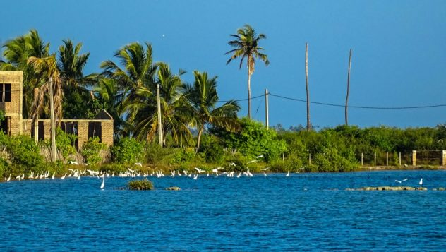 Prorider Trip Sri Lanka Frumusețe Kalpitiya Lagoon Păsări