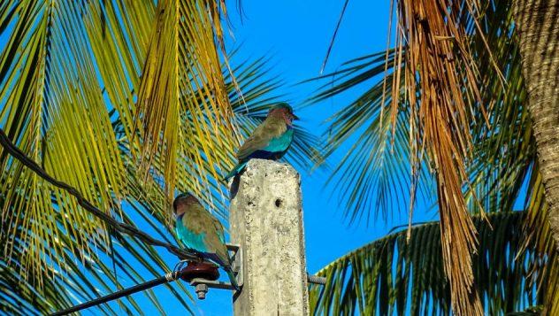 Prorider Trip Sri Lanka Beauty (kalpitiya) Life King Bird