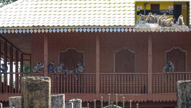 Prorider Trip Sri Lanka Frumusețe Anuradhapura Locuitoare maimuțe