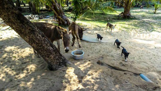 Prorider Trip Sri Lanka Beauty Life Donkeys Neighbors