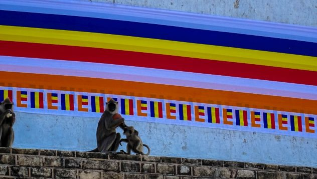 Prorider Trip Sri Lanka Frumusețe Anuradhapura (ruwanwelisaya) Stupa Monkeys