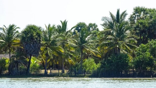 Prorider Trip Sri Lanka Beauty Kalpitiya Lagoon Palm Trees