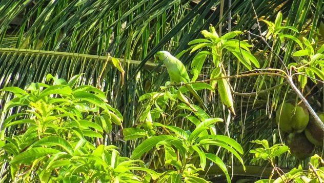 Prorider Trip Sri Lanka Beauty (kalpitiya) Life Perrot
