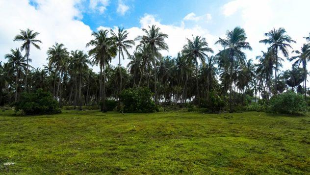 Prorider Trip School Kite Sri Lanka Palm Trees