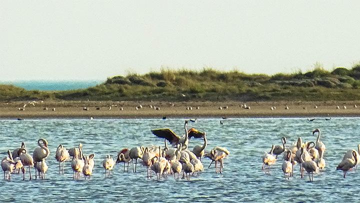Prorider Story Trip Turkey Gokceada Island Inhabitants Flamingos 2