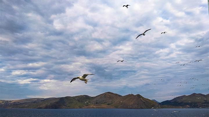 Prorider Story Trip Turcia Insula Gokceada Locuitori pescăruși în jurul feribotului