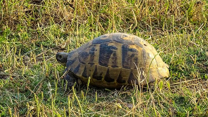 Prorider Story Trip Turkey Gokceada Island Inhabitants Turtle